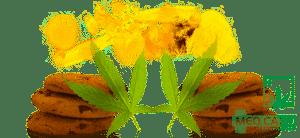 Marijuana Edible